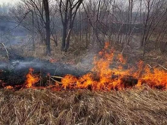В Югре нашли виновных в первых ландшафтных пожарах