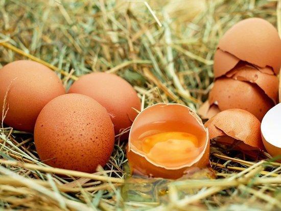 Производство куриных яиц снизилось в Псковской области