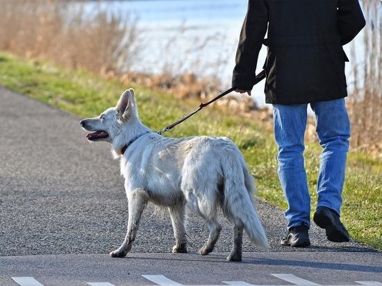 «У меня случилось горе — во время прогулки с собакой ее насмерть сбила машина