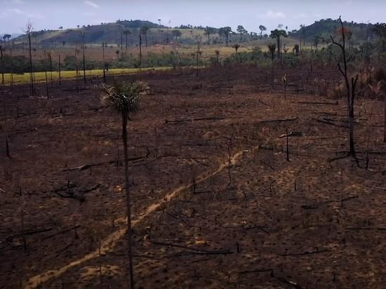 ДиКаприо попросил Байдена не подписывать с Бразилией соглашений из-за «устрашающих» вырубок Амазонии