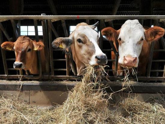 Тюменская область и Республика Татарстан займутся развитием фермерского движения