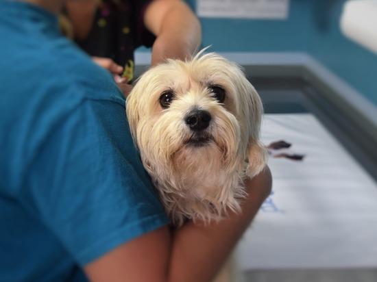 На Кубани владельцы животных и ветсообщество высказались о вакцинации домашних питомцев от COVID-19