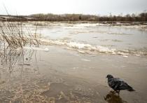 Уровень воды в Вятке поднялся на 289 см от нулевого поста