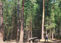 В Тюменской области растет количество лесных пожаров