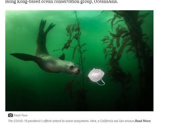"""""""По оценкам, к 2048 году в наших океанах будет больше пластика, чем рыбы"""", - эксперт по защите океана"""
