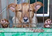 Житель Черногорска пожаловался в прокуратуру на приют для животных