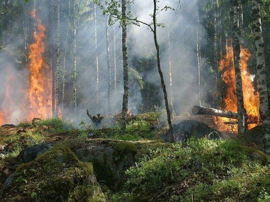 В Бурятии увеличилась площадь пожаров из-за пала сухой травы