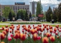 Более ста тысяч цветов высадят в Серпухове