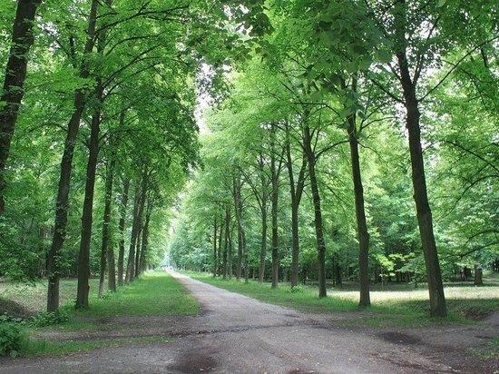 Более трети татарстанцев будут жить поблизости от парков