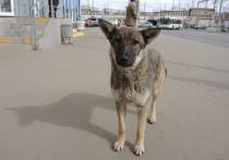 Специалист по отлову бездомных собак жестоко избил жителя Каширы, вступившегося за бездомного пса