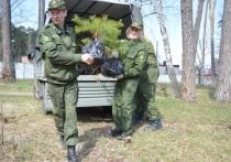 Новые деревья высажены в Серпуховском бору