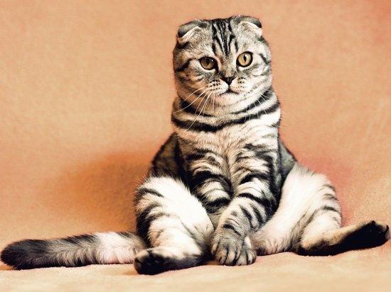 В России начались испытания вакцины от аллергии на кошек