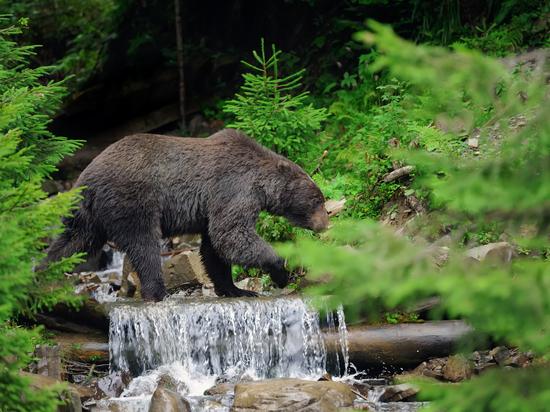 В Башкирии на рабочих напал медведь