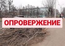 Мэрия Комсомольска-на-Амуре: «Информация о незаконном сносе деревьев не соответствует действительности»