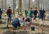 Жители Хабаровска высадили молодые деревья и кустарники в «Зеленом сквере»