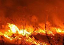 Жителям Серпухова напомнили о лесных пожарах