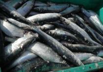 На Сахалине рыбак погиб, собирая выбросившуюся на берег сельдь, сообщили в пресс-службе Следственного комитета