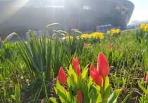 На аллеях возле «Донбасс Арены» в Донецке появились цветы: ФОТОФАКТ