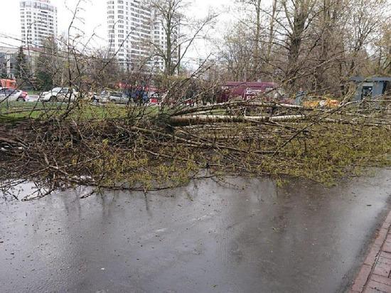 Дерево упало на школьницу на юго-западе Москвы