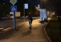Подробности операции по спасению лося, случайно забредшего на территорию Москвы, в район Бирюлево, стали известны «МК»