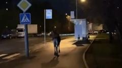 В Москве спасли лося, вышедшего к дороге