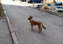 Омичка вознегодовала из-за собаки, выброшенной на улицу съёмщиками жилья
