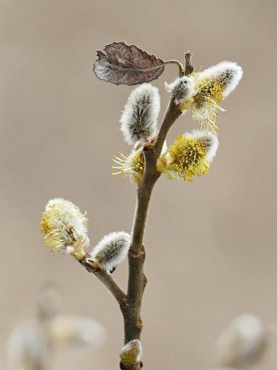 Аллергологи предупреждают нижегородцев о начале пыления деревьев