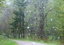 Мокрый снег ожидается в Псковской области 26 апреля
