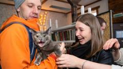 У меня «Лапки»: в Петрозаводске прошла выставка-раздача кошек