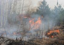 Количество природных пожаров в Алтайском крае продолжает расти.