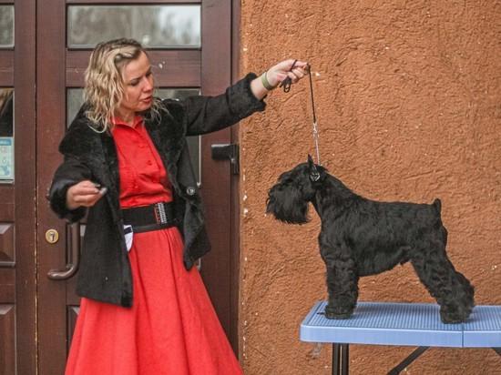 В Кемерово съехалось больше 300 собак для определения самых красивых и породных