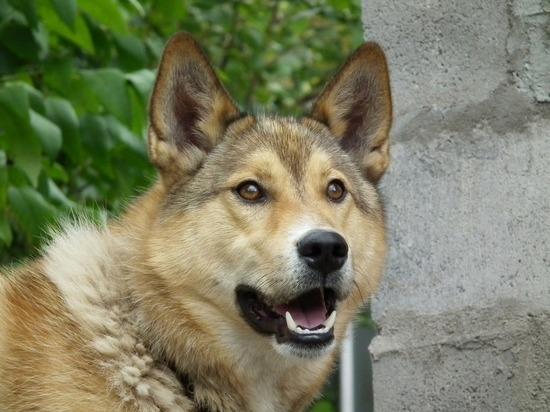 Следственный комитет проверит факты нападения бродячих псов на жителей Рубцовска