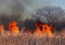 Жителям Серпухова напомнили о штрафах за поджог травы