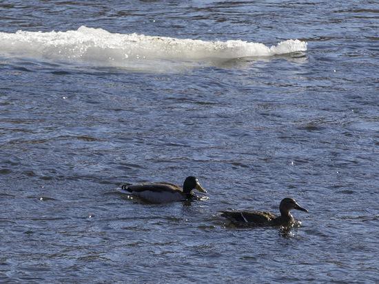 Байдарочника, пропавшего на реке Ай в Челябинской области, нашли мертвым