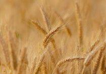 Незаконный оборот небезопасных партий зерна предотвратили в Псковской области