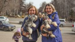 В центре Кемерова собралось больше 300 собак