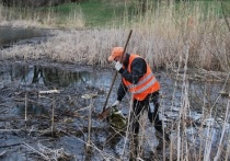Пожарный пруд в одном из посёлков Серпухова почистили