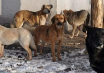 Айсен Николаев: Правильное сочетание мер позволит решить проблему безнадзорных животных