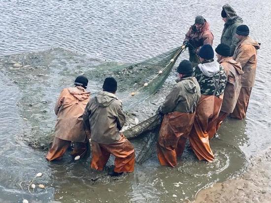 Нижегородские рыбхозы начали зарыблять пруды