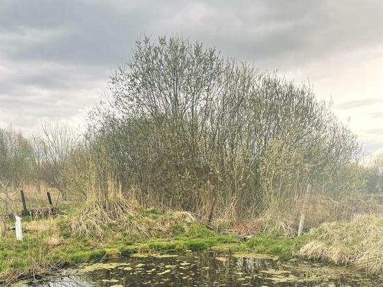 Калужанка утонула в пруду на своем участке