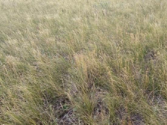В Калмыкии земли сельхозназначения заросли сорняками