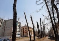 Власти Комсомольска-на-Амуре отказались от омолаживающей обрезки деревьев