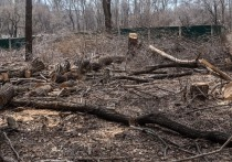 Депутат хабаровской гордумы Михаил Сидоров отреагировал на вырубку деревьев рядом с парком «Динамо»