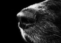 Беловчане пожаловались на массовую гибель бездомных собак