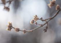 Вторая половина мая в Псковской области будет жаркой