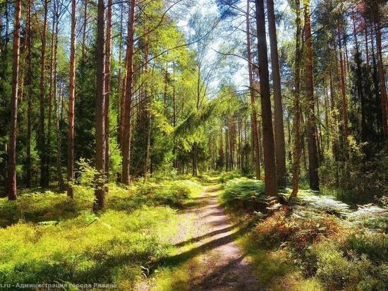В Рязанской области введен особый противопожарный режим