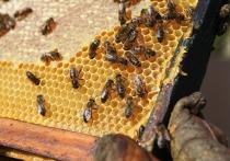 Магнитолу и рамки с мёдом из пчелиных ульев украли в Псковской области