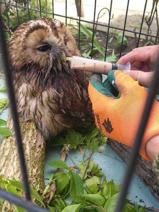 Соловей спас совенка в Железноводске