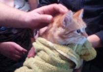 В Новороссийске кот провёл пять дней в ливневой трубе