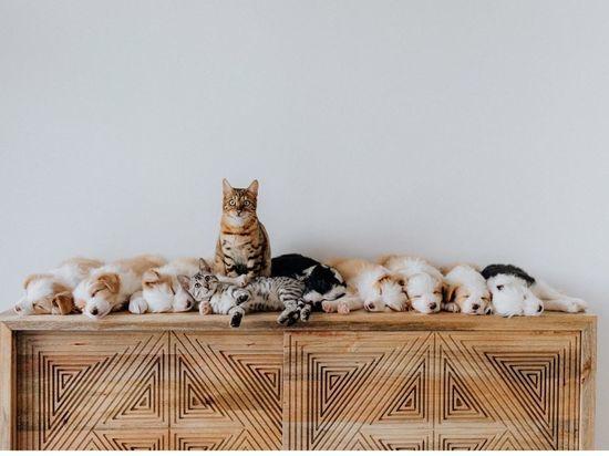 Петербургские депутаты предлагают ограничить количество кошек и собак в квартирах россиян